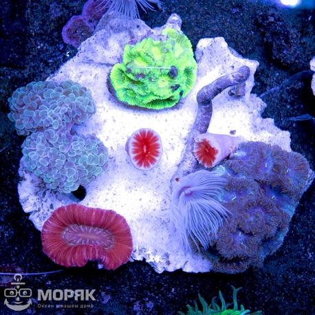 Микс из кораллов